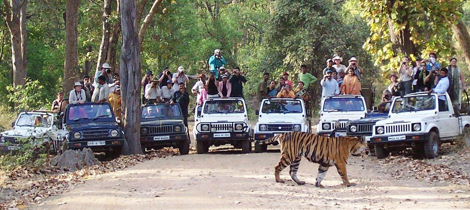 Kanha National Park: Jeep Safari