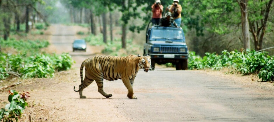 Pench: Jungle Safari