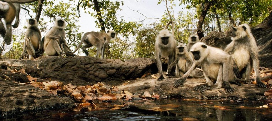 Bandhavgarh National Park: Jeep Safari