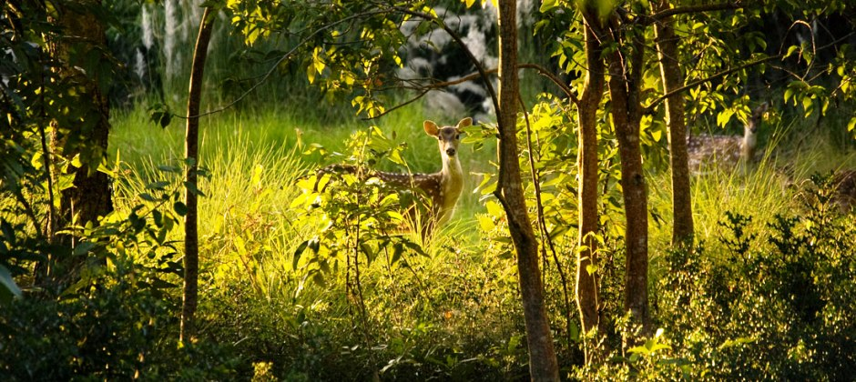 Sundarbans: Sightseeing