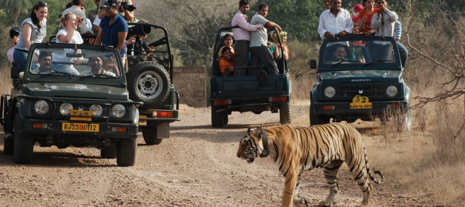 Ranthambore National Park: Safari