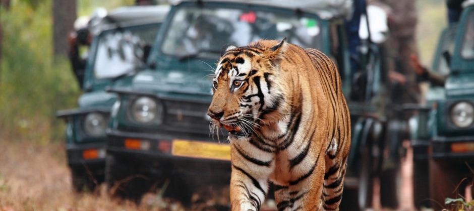 Depart - Ranthambore National Park – Jaipur