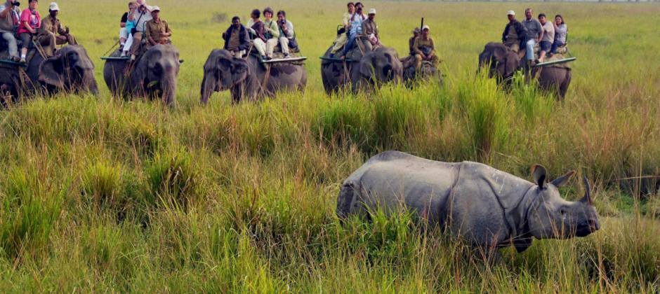 Kaziranga National Park: Safari