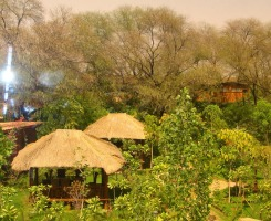 The Tree House Resort - Jaipur