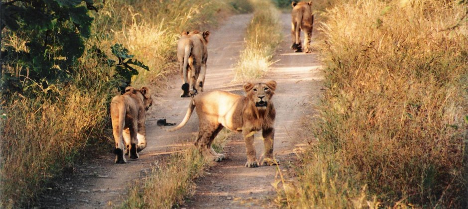 Gir National Park – Diu