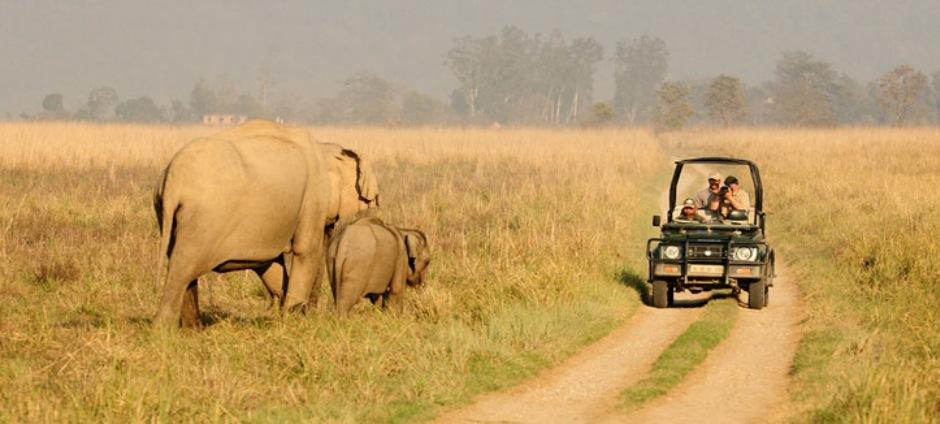 Corbett: Jungle Safari